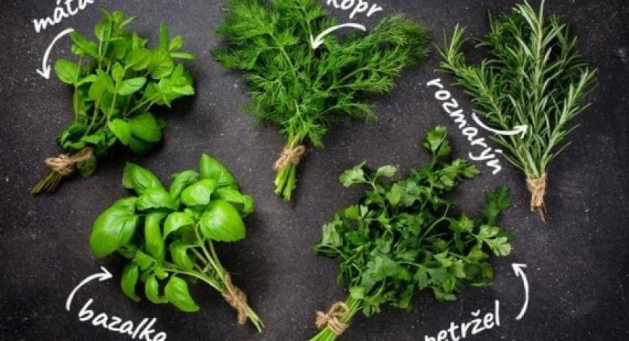 Soľ a bylinky v strave dojčiat a malých detí